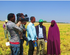 Public-private partnerships for sustainable legume technology dissemination in Ethiopia